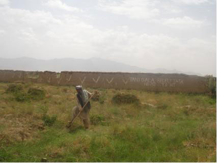 An Afghan farmer tends to his field in safety, after it has been carefully cleared of persistent landmines, unexploded ordnance, and booby traps by The HALO Trust. [The HALO Trust]